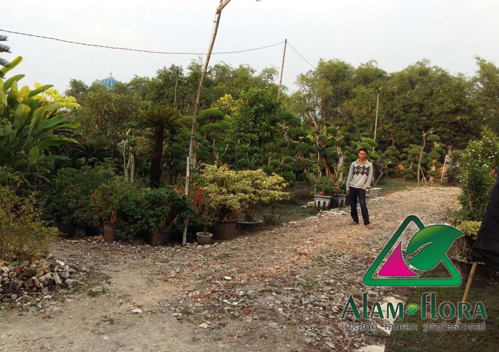 jasa-supplier-tanaman-hias-pelindung-dan-bonsai-6