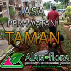 alam-flora_tukang_taman_surabaya_bonsai_banner_jasa_pembuatan_taman_feature_tebing_perawatan-taman