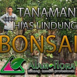 alam-flora_tukang_taman_surabaya_bonsai_banner_jasa_pembuatan_taman_feature_tebing_tanaman-hias