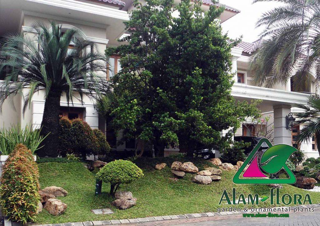 tukang taman surabaya sidoarjo gresik malang lamongan - alam-flora gambar taman 1