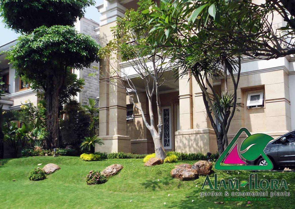 tukang taman surabaya sidoarjo gresik malang lamongan - alam-flora gambar taman 2