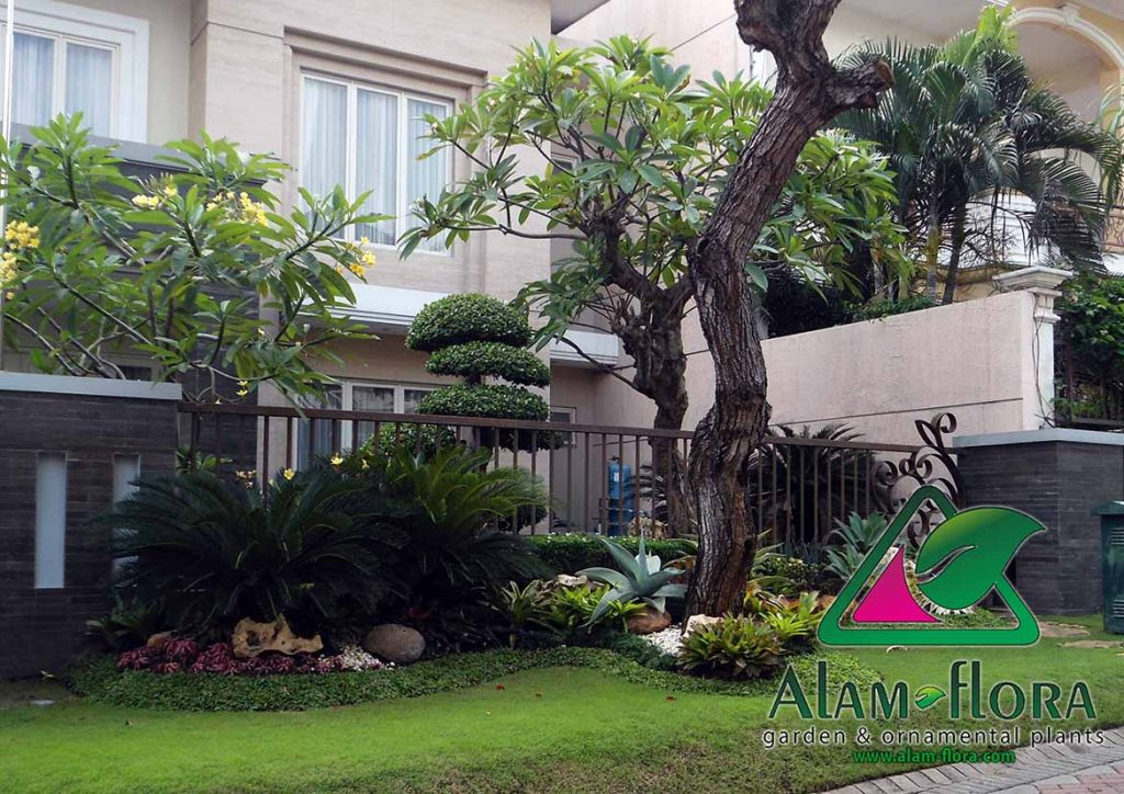 tukang taman surabaya sidoarjo gresik malang lamongan - alam-flora gambar taman 3