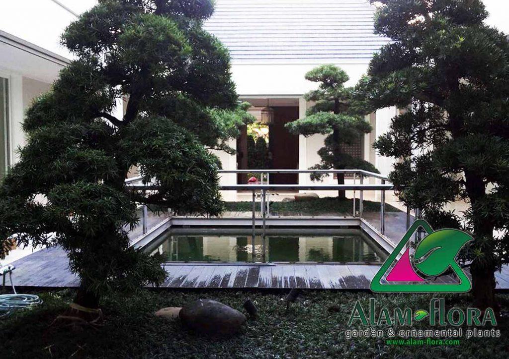gallery desain taman roof atap 3D dan pengerjaannya 5