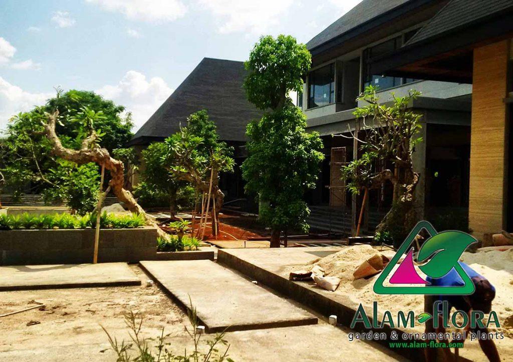 gallery desain taman roof atap 3D dan pengerjaannya 7