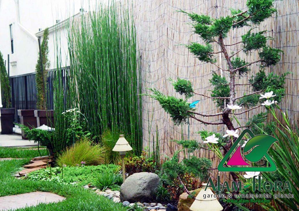 taman rumah minimalis konsep jepang