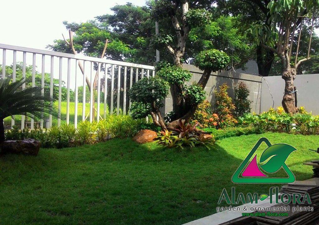 tukang taman sidoarjo taman minimalis outdor terbaru alam flora 1