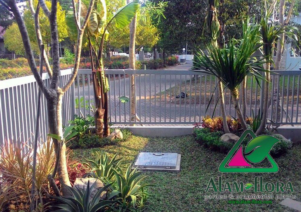tukang taman sidoarjo taman minimalis outdor terbaru alam flora 2