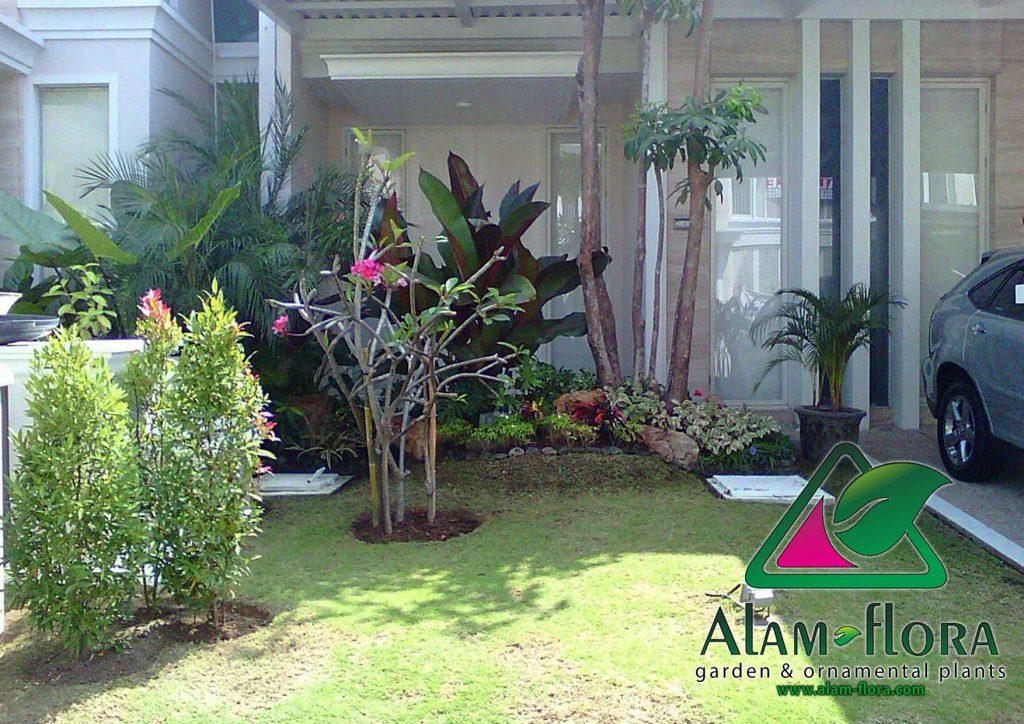 tukang taman sidoarjo taman minimalis outdor terbaru alam flora 4