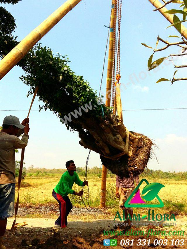 Proses Packing & Penanaman Pohon 11