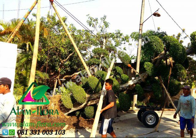 Proses Packing & Penanaman Pohon 13