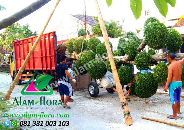 Proses Packing & Penanaman Pohon 14