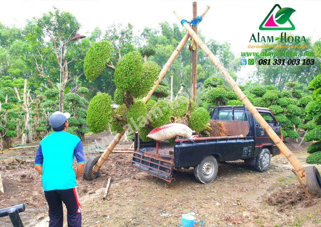 Proses Packing & Penanaman Pohon 18
