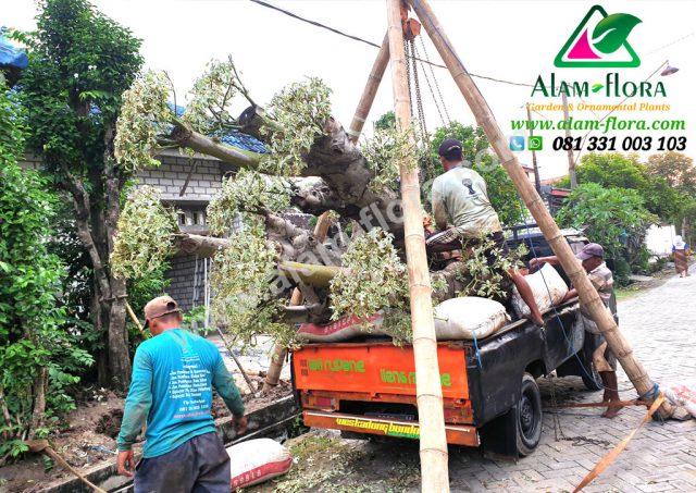 Proses Packing & Penanaman Pohon 2