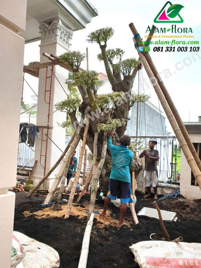 Proses Packing & Penanaman Pohon 3