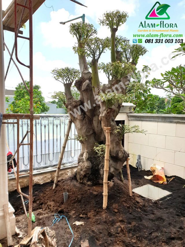 Proses Packing & Penanaman Pohon 4