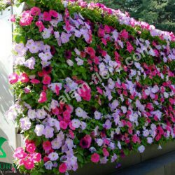 vertikal garden 51